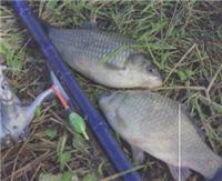 Рыбалка в Стремилово
