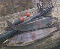 Осенний лосось в Забайкалье