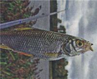 Рыбалка на Малагуше