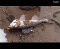 Видео «Моя рыбалка» —  Москва-река. Ночная ловля судака (5 выпуск)