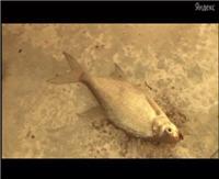 Видео «Моя рыбалка» — В глухозимье на Можайском и Яузском водохранилищах. Лещ. Часть 2 (12 выпуск)