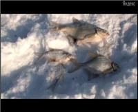 """Видео «Моя рыбалка» — Фестиваль """"Народная Рыбалка"""". Часть 2 (14 выпуск)"""