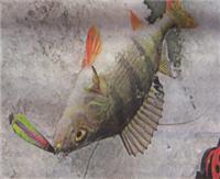 За рыбинским окунем по последнему льду