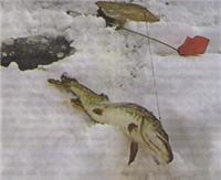 Весенние жерлицы под берегом