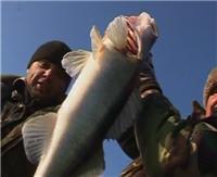 Видео «Моя рыбалка» — Рыбалка в Волгоградской области, район Коршевитое