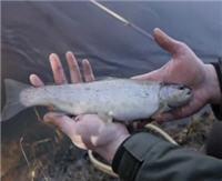 Видео «Siandien Kimba» — Ловля форели на реке