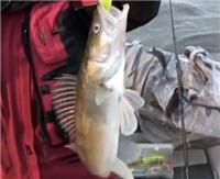 Видео «Моя рыбалка» — Весенняя ловля. Часть 2 (30 выпуск)