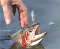 Видео «Моя рыбалка» — Весенняя Форель. Часть 2 (38 выпуск)