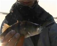 """Видео «Рыболовные путешествия» — Сызрань летом. База """"Удача"""""""