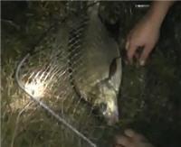 Видео «Рыбалка с Пашком» — Ночной лещ (13 выпуск)