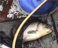 Видео «Моя рыбалка» — Весенняя ловля карася (45 выпуск)
