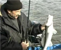Видео «Серебряный ручей» — Со спиннингом за судаком