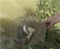 Видео «Моя рыбалка» — Графские пруды (47 выпуск)