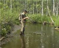 Видео «Серебряный ручей» — С ультралайтом за крупным хищником. Часть 2
