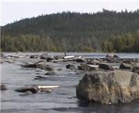 Видео «Серебряный ручей» — Карелия - край рыболовной мечты
