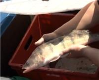 Видео «Моя рыбалка» — Рыбинское Водохранилище. Лига Профессиональных Рыболовов — 2012. Часть 4 (57 выпуск)