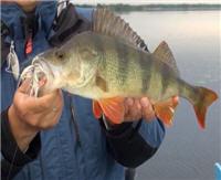 Видео «Рыбалка на Руси» — Январь 2013