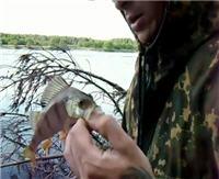 Видео «Болен рыбалкой» — О спиннинге. По берегу реки