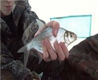 Видео « Рыбачить здорово» - Новомариинское водохранилище. Ловля леща (1 выпуск)
