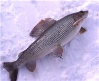 Видео «Рыболов-Элит» — Парус на льду