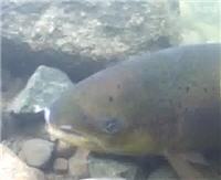 Видео «Рыболов-Элит» — Холодное очарование Скандинавии