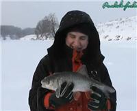 Видео «Рыбалка с Пашком» — Голавль на жерлицы