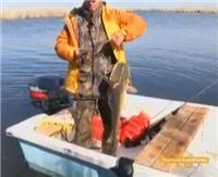 Видео «Подводный мир» -  Охота на судака