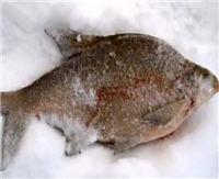 Видео «Моя рыбалка» — Рыбалка на Можайке. Часть 1 (84 выпуск)