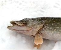 Видео «Моя рыбалка» — Рыбалка на Можайке. Часть 2 (85 выпуск)