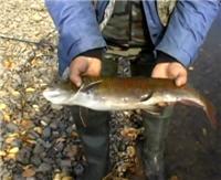 Видео «Клевый» — Рыбалка в Монголии. Река Онон-Гол