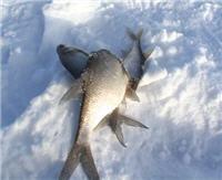 Видео «По клевым местам» —  Рыбалка на озере Бардово