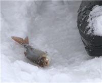 Видео «По клевым местам» —  Рыбалка на озере Алё. Часть 3