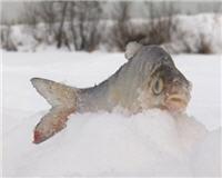 Видео «По клевым местам» —   Рыбалка на Дубне. Часть 2
