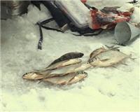 Видео «По клевым местам» —  Рыбалка на Истринском водохранилище. Часть 2