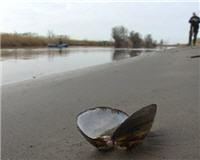 Видео «По клевым местам» —    Рыбалка в Астраханской области