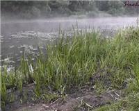 Видео «Рыбалка с Пашком» — Ловим леща на фидер