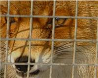 Видео «Главная охота» -  Охотхозяйство Российской Федерации
