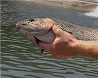 Видео «Главная рыбалка» —   Ловля форели в специальных водоемах