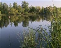 Видео «Профессиональная рыбалка» —  Ловля маховым удилищем на небольших водоемах с маленькой глубиной