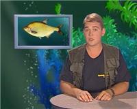 Видео «Рыбьи портреты» — Лещ