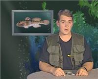 Видео «Рыбьи портреты» — Бычок
