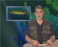 Видео «Рыбьи портреты» — Щука