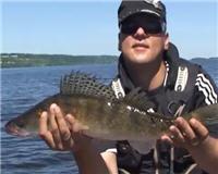 Видео «Наша рыбалка» — Судак на балансир