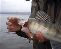 Видео «О рыбалке всерьез» — За осенним судаком на джиг
