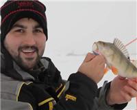 Видео «Рыболовный дневник» — Ловля окуня на балансир