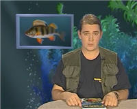 Видео «Рыбьи портреты» — Окунь