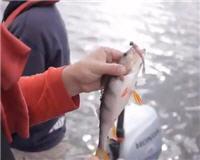 Видео «Siandien Kimba» — Ловля окуня на Каунасском водохранилище