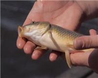 Видео «Siandien Kimba» — Ловля на поплавочную удочку