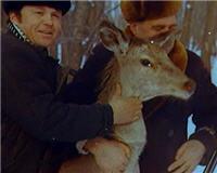 Видео «Главная охота» — Охотничье хозяйство РФ