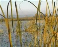 Видео «Главная охота» —  Водоплавающая дичь